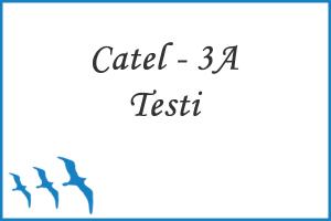 Cattell 3A Zeka Testi